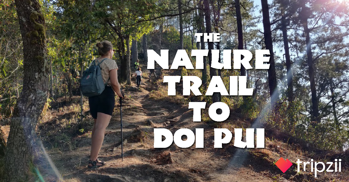 The Nature Trail to Doi Pui.