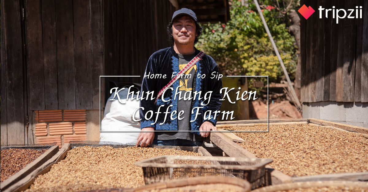 Home Farm To Sip : Khun Chang Kien Coffee Farm